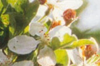 Voorjaarssalade