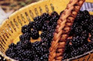 Bramen-kaastaart